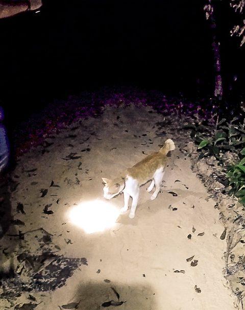 Katze begleitet uns beim Dschungelwalk