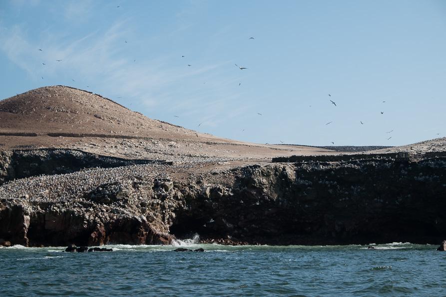 Islas Ballestas birds