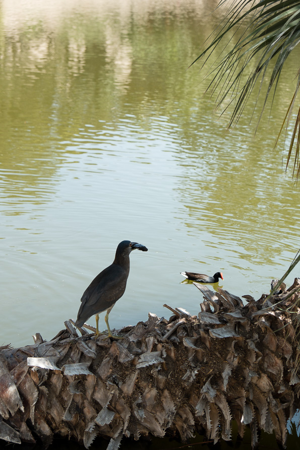Birds at the Oasis