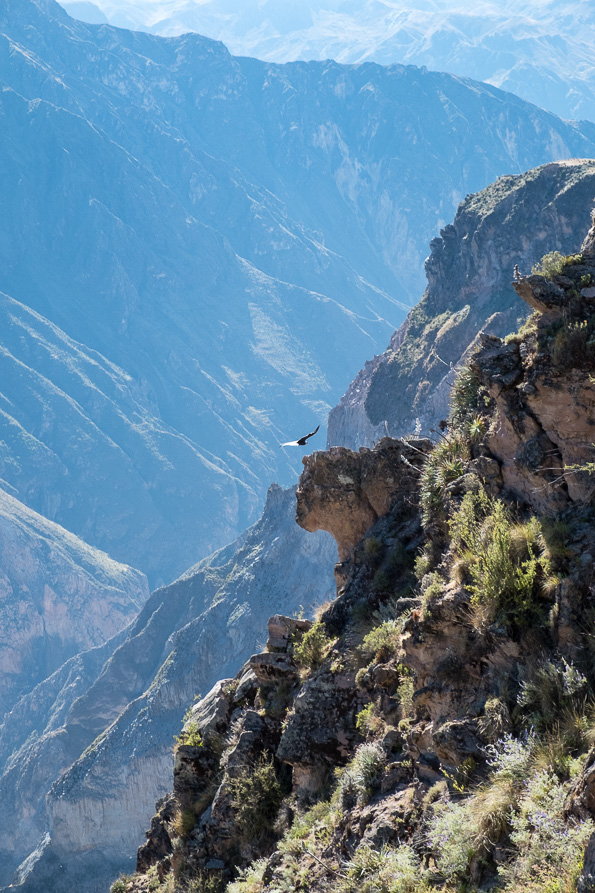 Cruz del Condor Colca Canyon